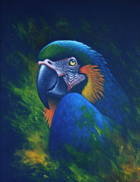Blue and Gold Macaw by artist Diarmid Doody