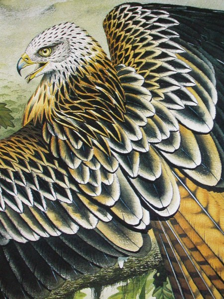 Red Kite by artist Diarmid Doody