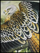 painting of red kite by wildlife artist Diarmid Doody